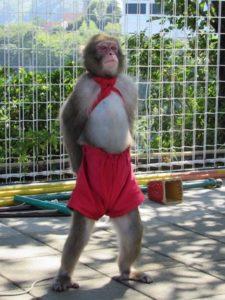 芸をする猿