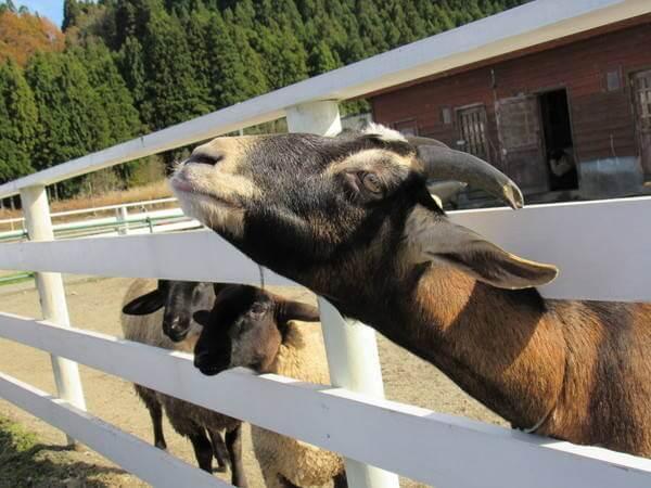 柵から顔を出している動物