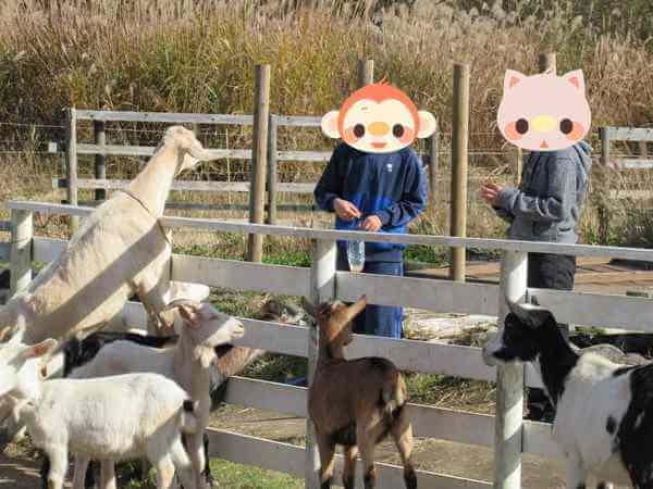 動物にエサをあげる子ども