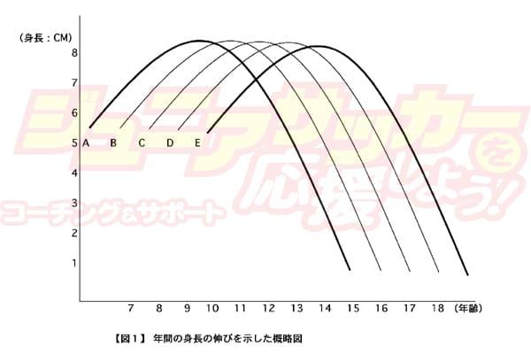 成長ピークの曲線